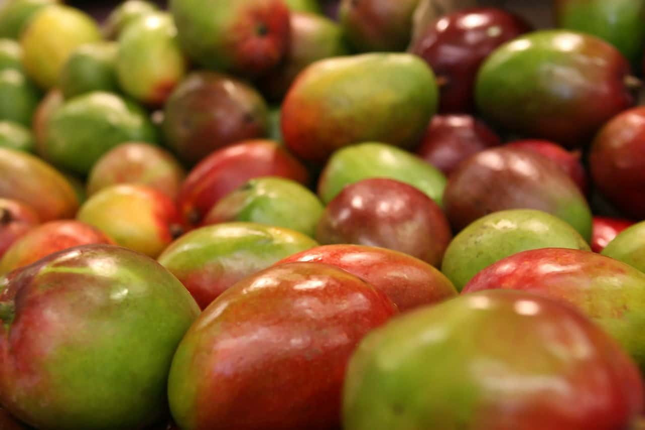 mango root