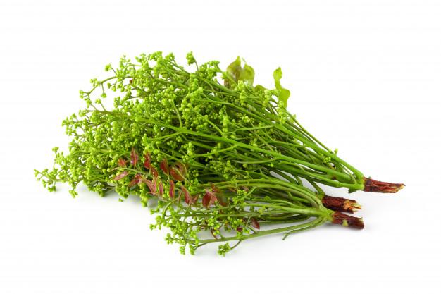 neem flower