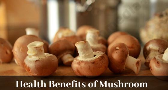 Mushroom Benefits